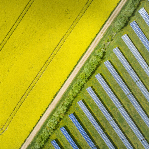 Canola fields and solar power plant in springtime - aerial view